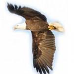 Wings-of-an-Eagle1-150x150.jpg